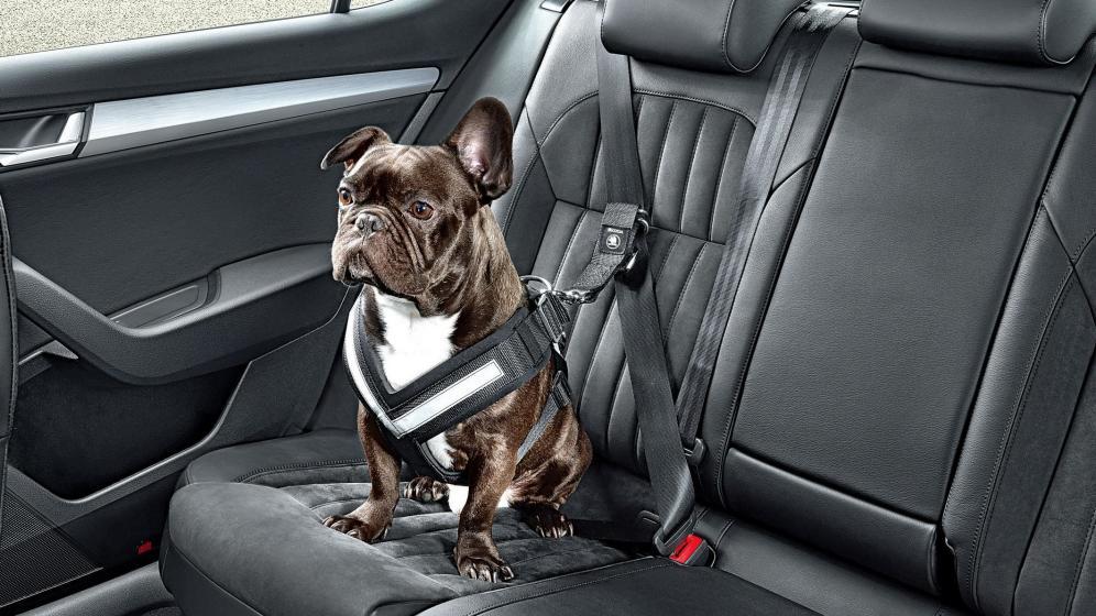 cinturon accesorios para perro en auto